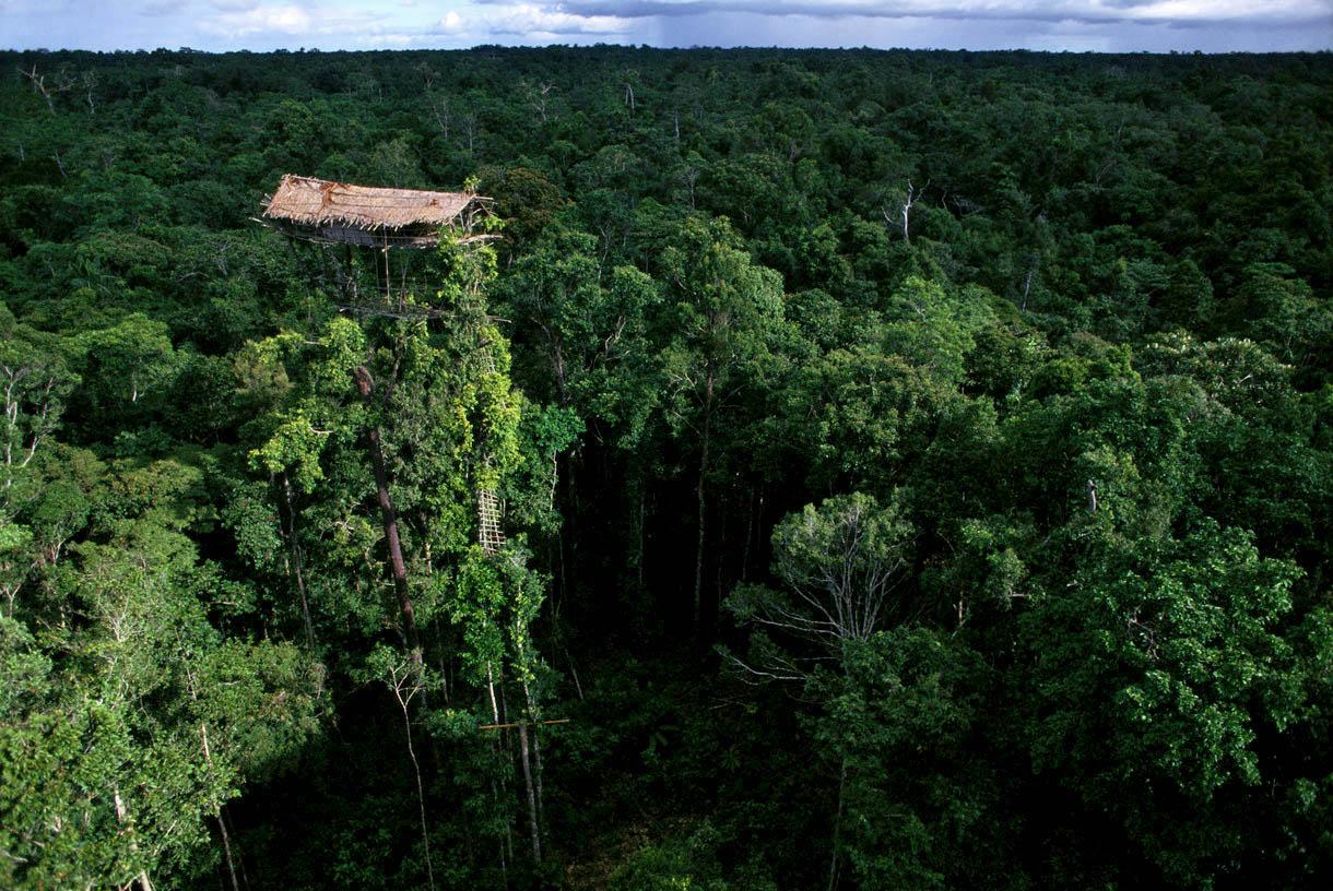 Rumah-Pohon-Suku-Korowai