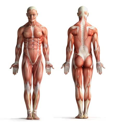 otot-pada-manusia